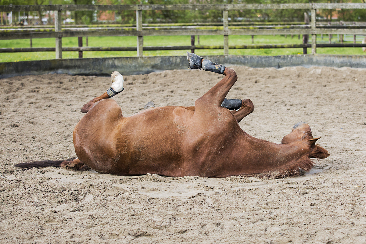 EquineServices-rollen1 2-1200px