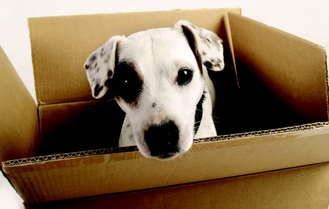 hond in doos