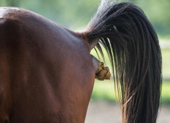 mestend paard