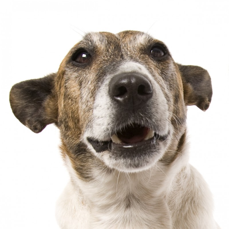 waarom loopt een hond scheef